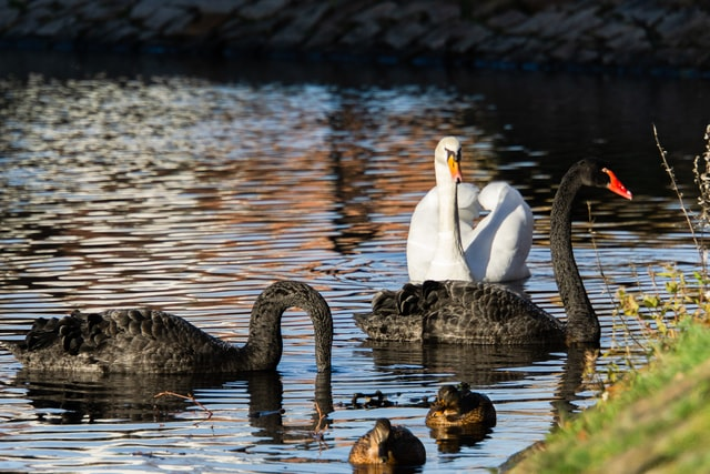 Climate Risk: A Black Swan No More